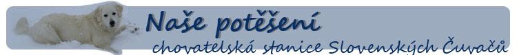 Slovenský čuvač - Chovatelská stanice - Naše potěšení - štěňátka zima 2014